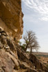 Small Baobab trees grow from the tumbled rocks on the cliffside of the Bandiagara escarpment
