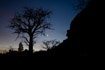 Venus rising behind a Baobab tree at the foot of the Bandiagara escarpment