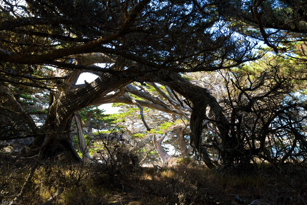Trees create a pattern of shadows on the Pacific coast of California near Point Lobos