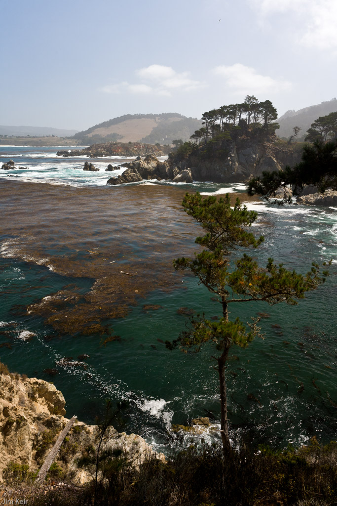 Dramatic coastline of surf, blue-green water and huge kelp forests near Point Lobos, California